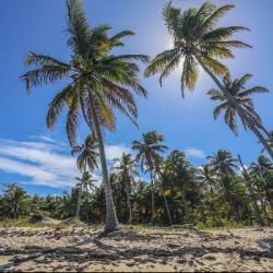 La Bachata inscrite au patrimoine mondial immatériel de l'Unesco !